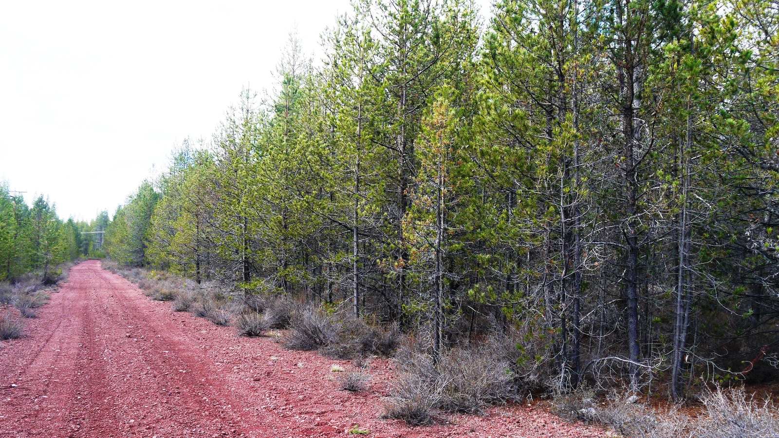 """<span style=""""color: red"""">*ON HOLD*</span>  - One Acre Lot Near Crater Lake Southern Oregon – Power – HWY 97"""