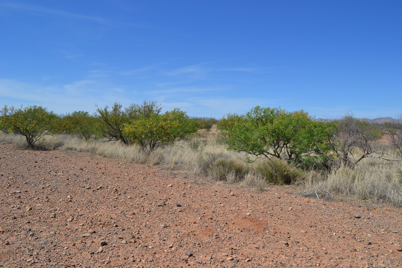 Nearly 1/2 Acre 3 Miles NE of Douglas AZ