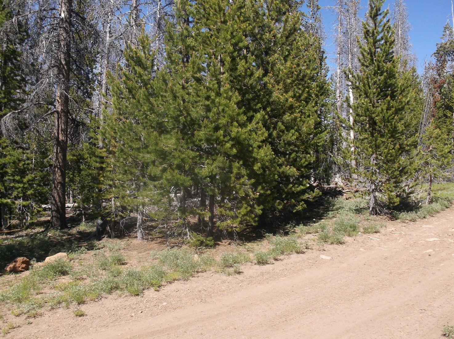 Corner Lot Near Entrance- Campbell/Deadhorse Lakes Private Camping Lot