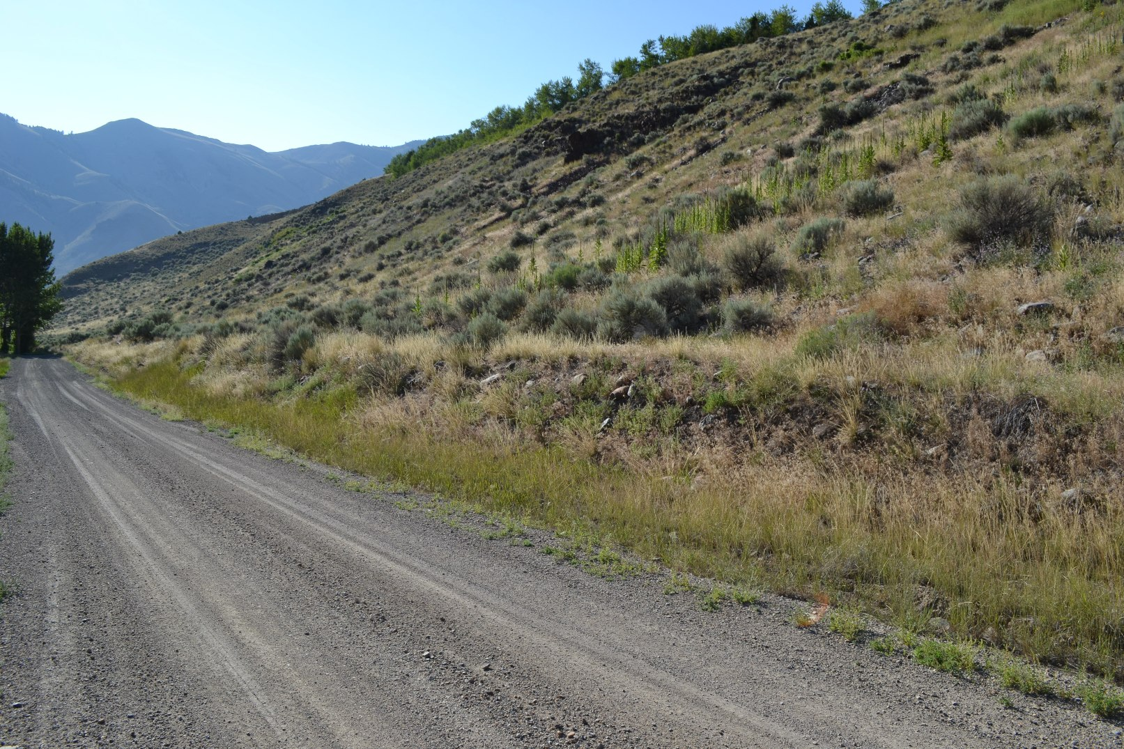 """<span style=""""color: red"""">*UNDER CONTRACT*</span>  - Two Acres – McKim Creek – Salmon Idaho"""