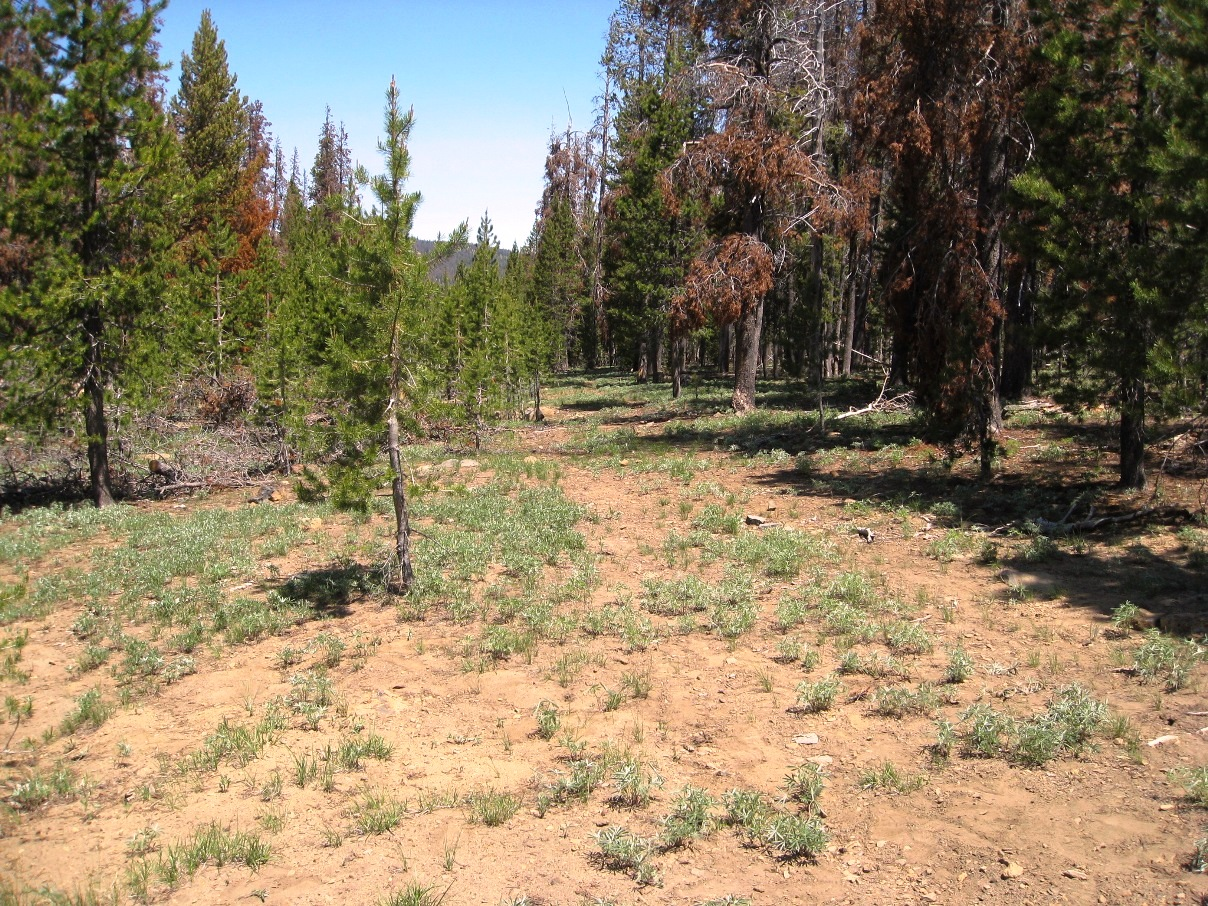 "<span style=""color: red"">*CONTRACT PENDING*</span>