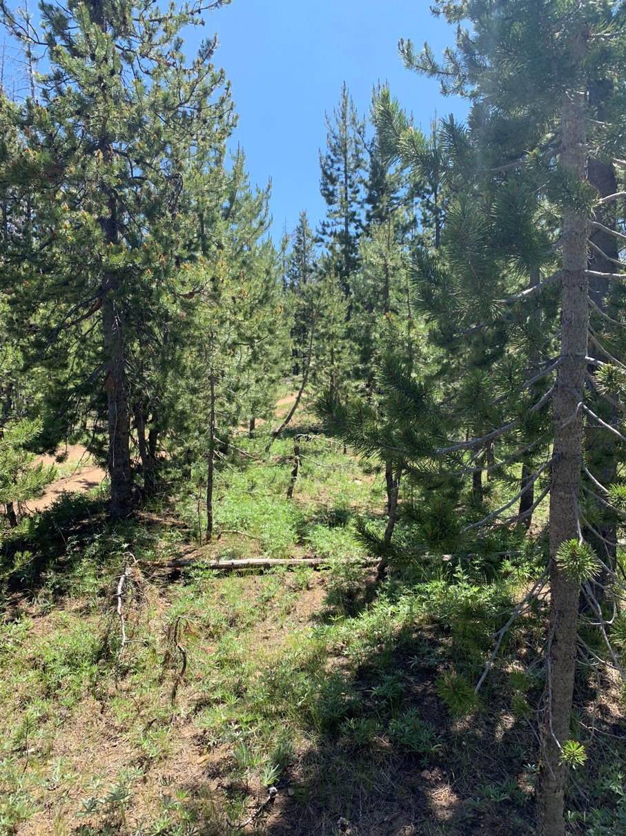 South Central Oregon Mountain Lakes Area Property – Great for Camping