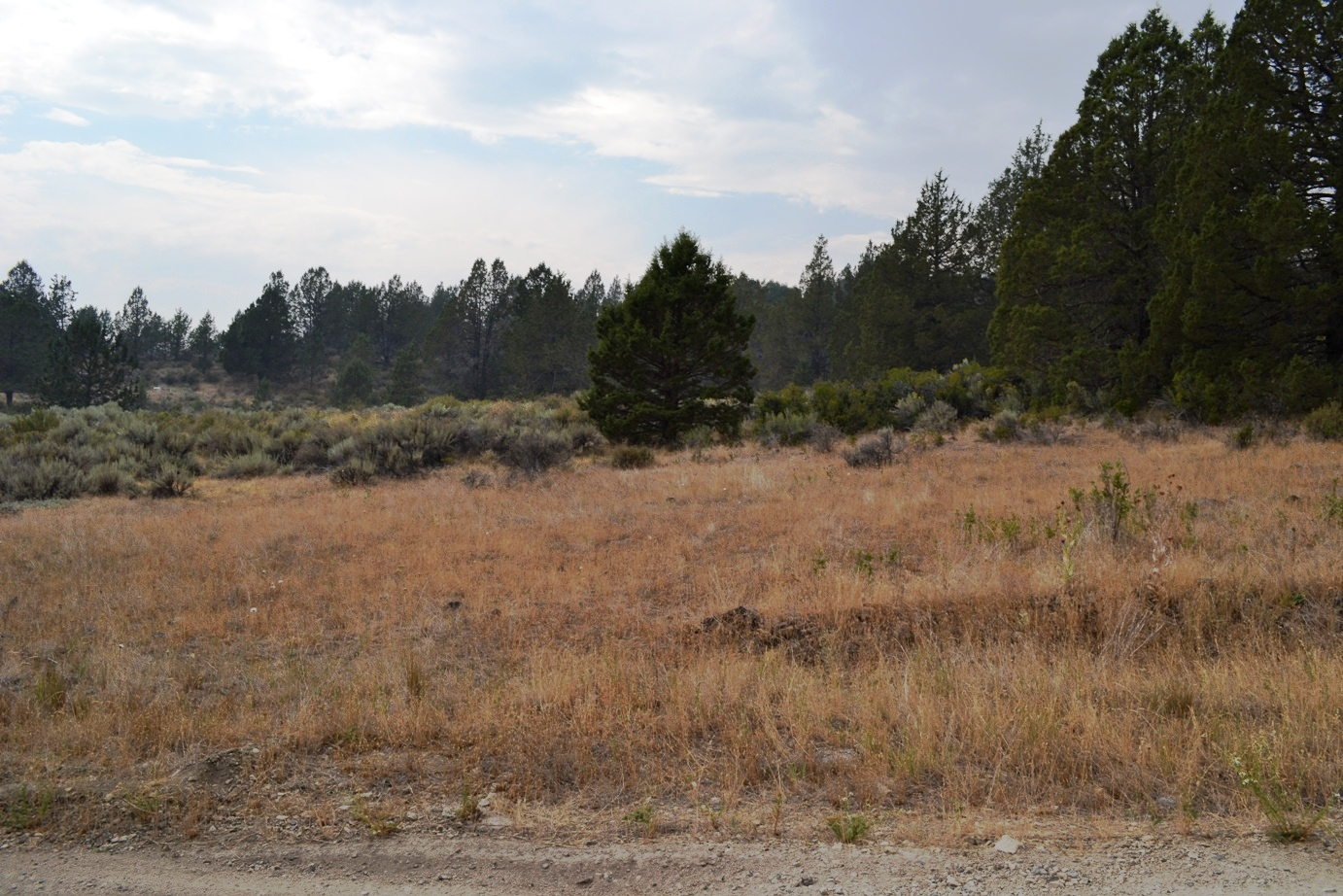 Secluded Corner Lot With Power and Easy Access Off Drews Road