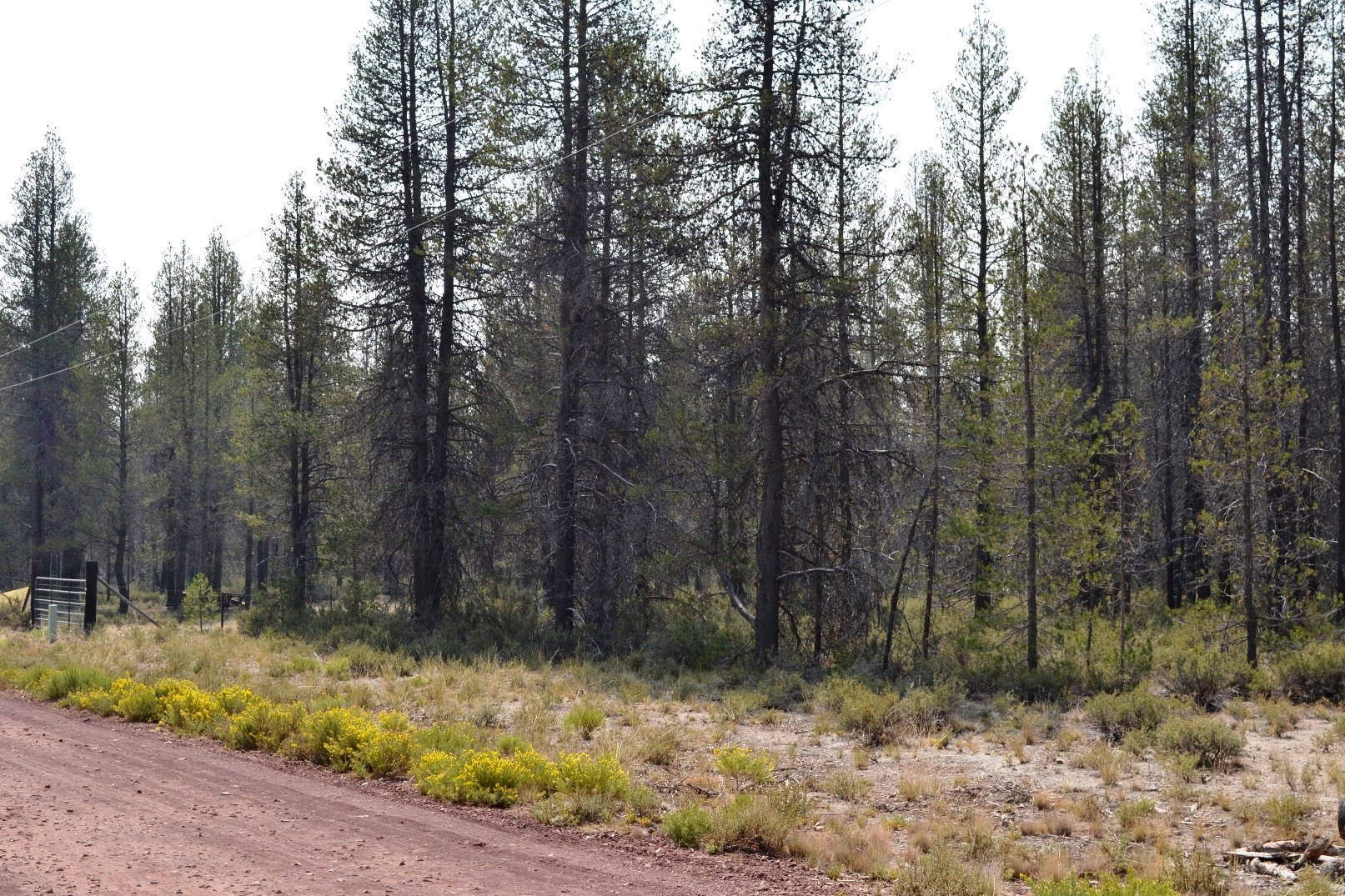 One Acre Lot Near Crater Lake Southern Oregon – Power – HWY 97 – Camping Permitted
