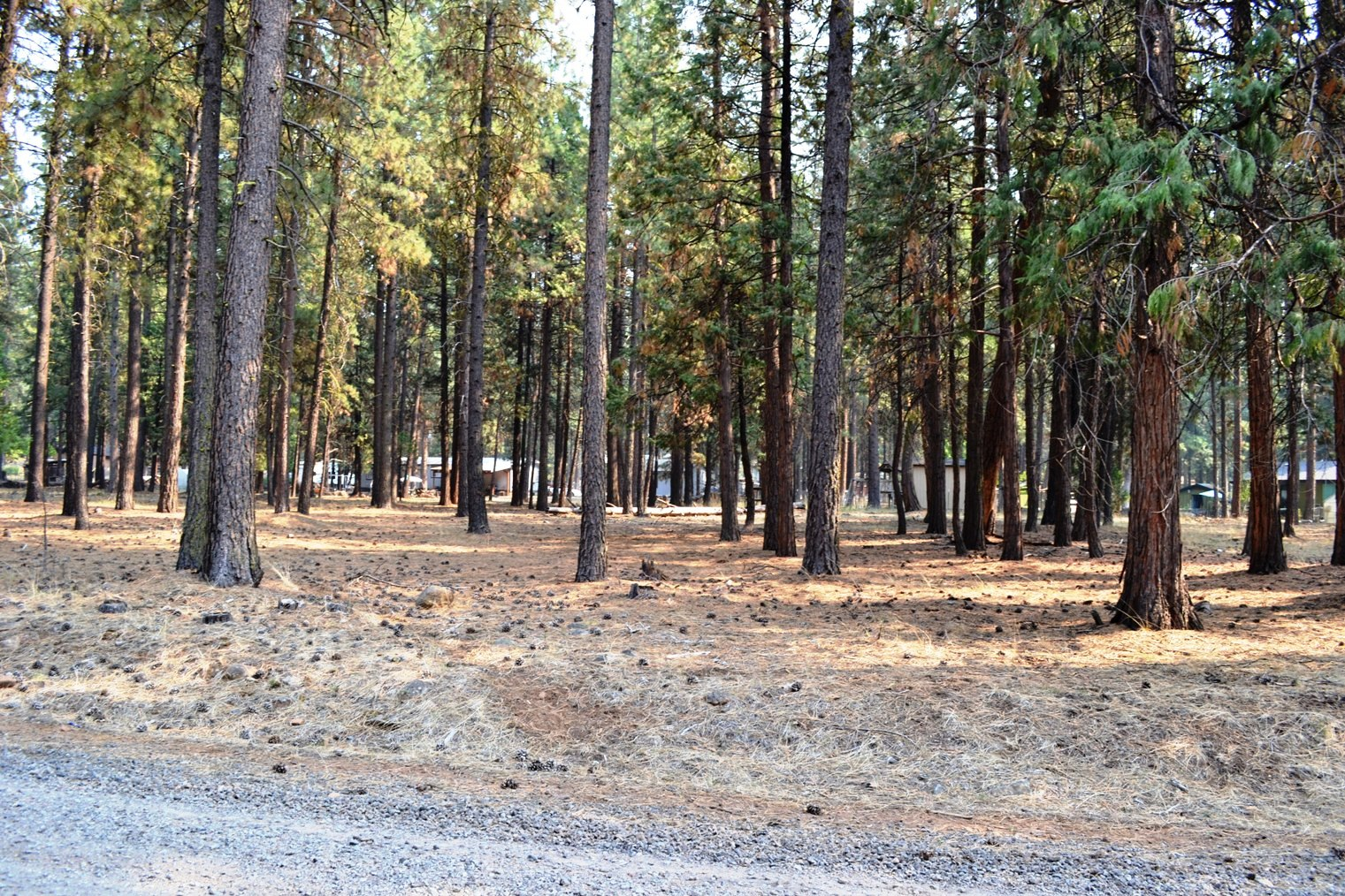 Keno Oregon Heavily Wooded Building Lot – Over One Acre – Power